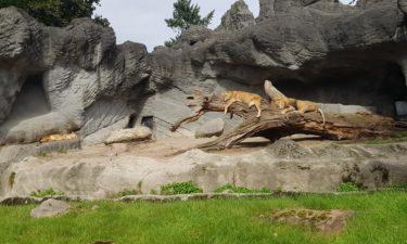 Tierpark Hagenbeck und die nicht vorhandene Digitalisierung