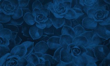 Die Pantonefarbe 2020 lautet Classic Blue