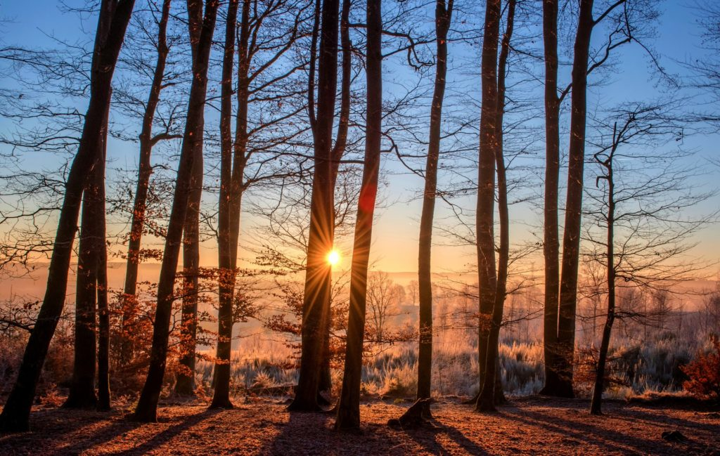 Bäume, Wald, pflanzen, Natur, Waldrekotd-Woche