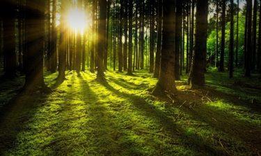 Waldrekord-Woche – SAT.1 setzt ein Zeichen für den Wald