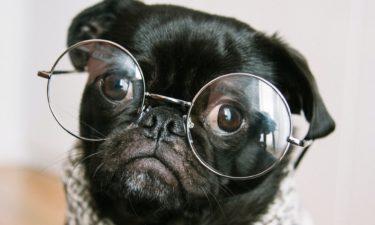 Instagram für Hunde? Tierisches Marketing mit Petfluencern