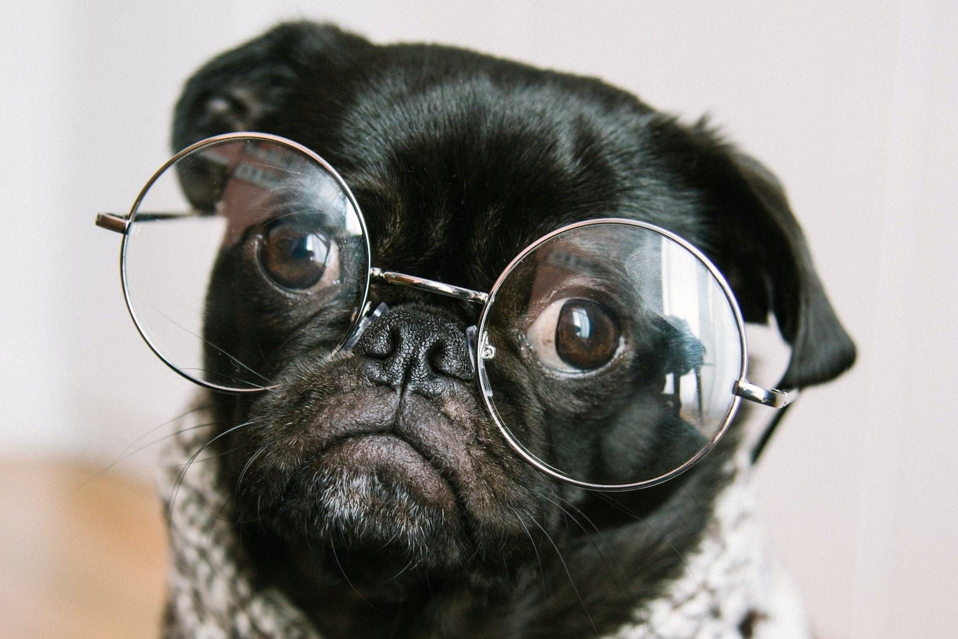 Instagram-Hunde - Tiere werden als Petfluencer Meinungsführer auf Instagram