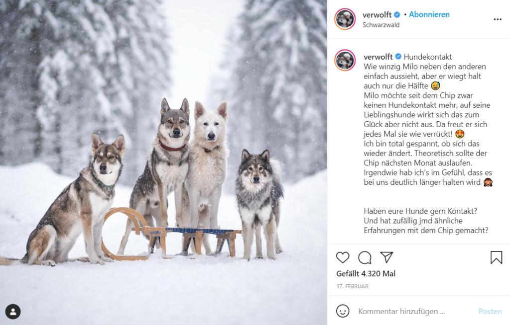 Petfluencer Kooperation zeigt verschiedene Instagram-Hunde im Schnee